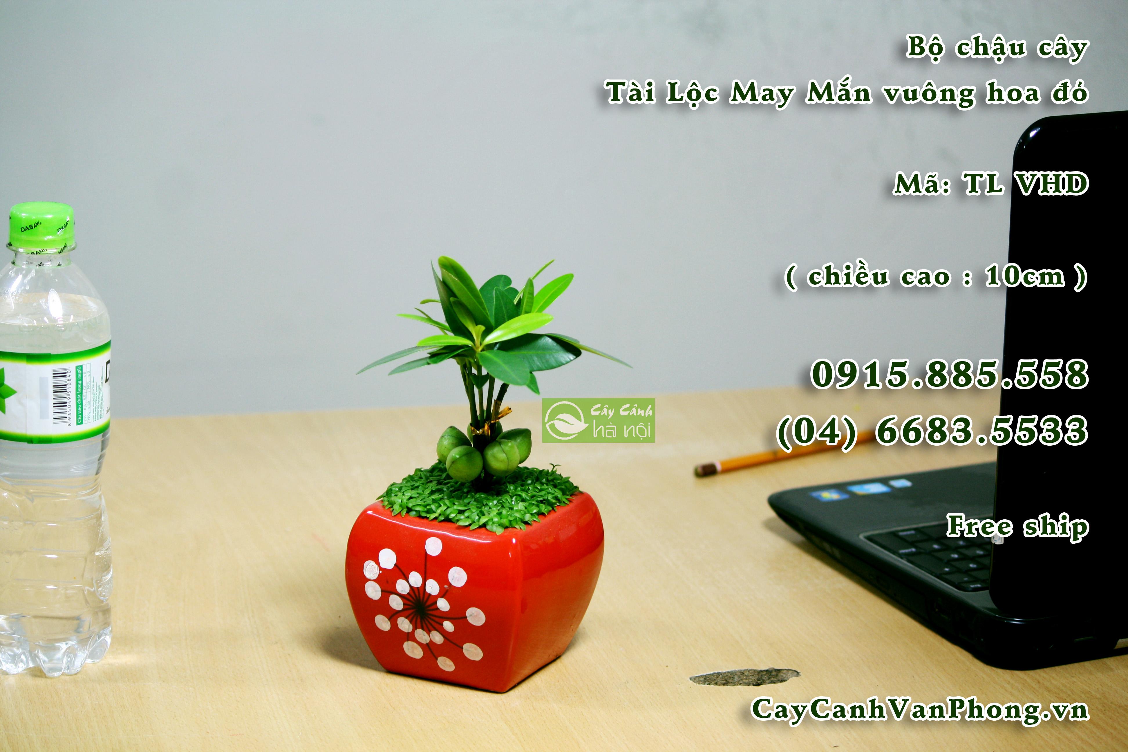 Cay-tai-loc-1 Cây tài lộc-loài cây đem lại tiền tài