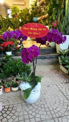 Hoa-lan-ho-diep-1 Hoa lan hồ điệp-loài hoa của sắc đẹp