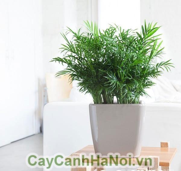 cây cảnh nội thất - loài cây tuyệt vời cho ngôi nhà của bạn