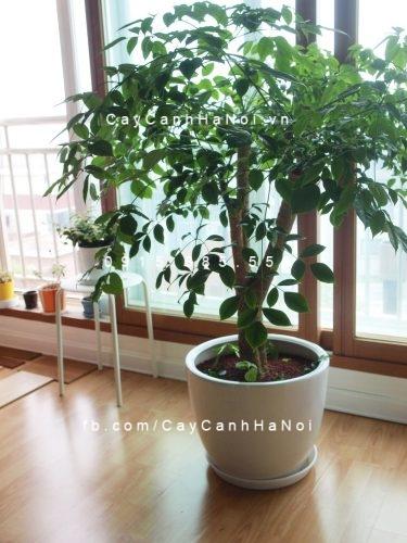 cay-canh-noi-that-2-1 Cây cảnh nội thất-loại cây tuyệt vời cho ngôi nhà của bạn