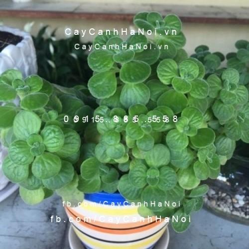 cay-hop-tuoi-hinh-2 Những loài cây hợp tuổi mang lại phú quý cho bạn