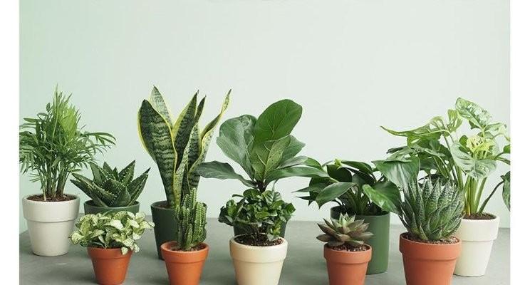 Những loài cây hợp tuổi mang lại phú quý cho bạn hình 1