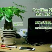 cay-kim-ngan-hinh-2