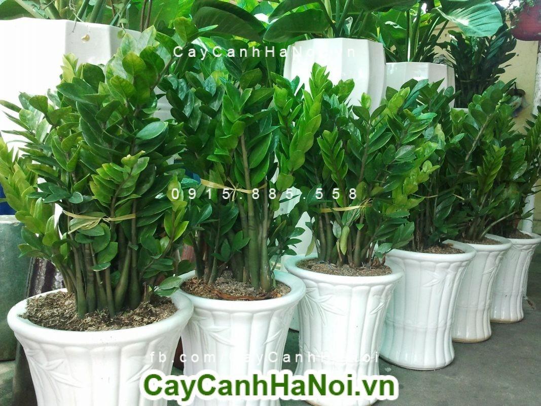 Tại sao nên trồng ít nhất một loại cây phong thủy 4