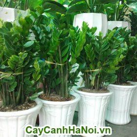 cay-qua-tang-khai-truong-1-600x800 Blog Posts
