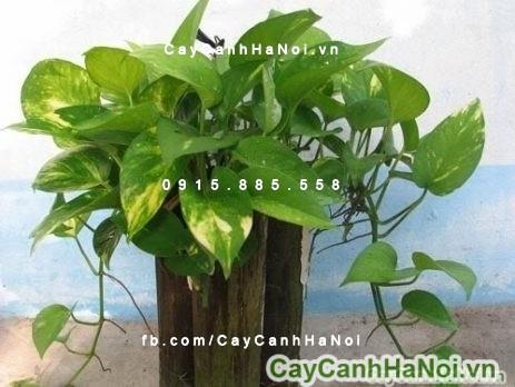 cay-phong-thuy-4 Tại sao nên trồng ít nhất một loại cây phong thủy