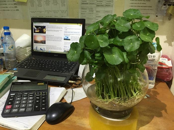 cay-thuy-canh-hinh-2 Cây thủy canh-loại cây tốt cho sức khỏe của mọi người