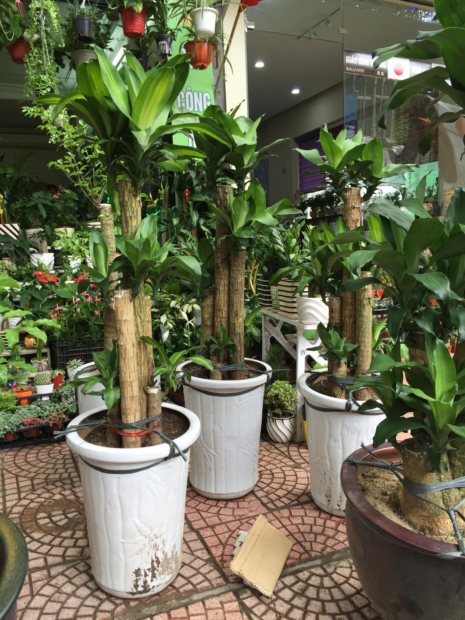 dich-vu-cho-thue-cay-1 Dịch vụ cho thuê cây cảnh uy tín tại Hà Nội