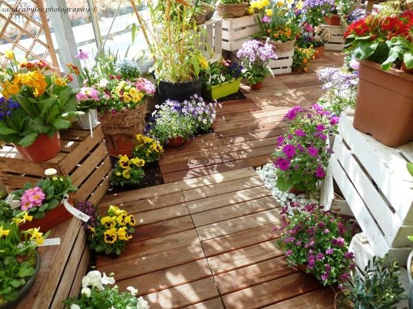 Hoa ban công-loài hoa tuyệt vời cho những ngày hè hình 1