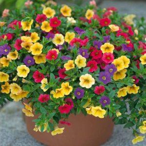 Hoa Triệu Chuông- loài hoa của thanh xuân mang đầy sức sống hình 1